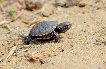 One Little tortoise - image gratuit #335087