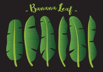 Vector Banana Leaf - vector gratuit #336077