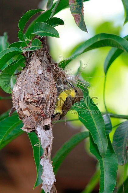 Small bird on nest - Free image #337457