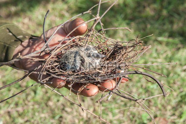 Nest mit eingebettet in der hand - Kostenloses image #337527