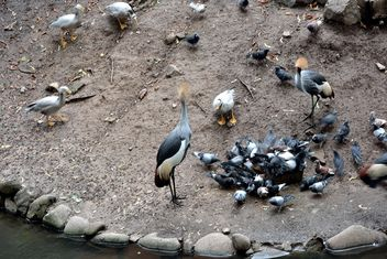 Birds near pond in zoo - бесплатный image #337807