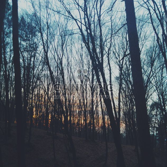 Tree in forest at sunset - Free image #338537