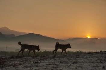 Two dogs at sunset - image #338587 gratis