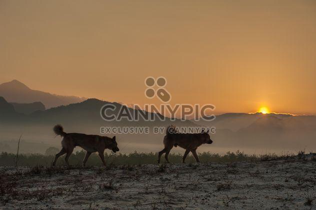 Zwei Hunde bei Sonnenuntergang - Kostenloses image #338587