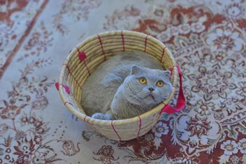 Grey cat in basket - Free image #339197