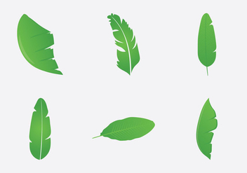 Free Banana Leaf Vector Illustration - Free vector #339397