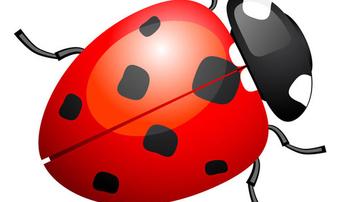 Cute ladybug or ladybird - Free vector #339677