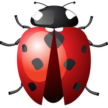 Ladybird with Spread Wings - Kostenloses vector #340217