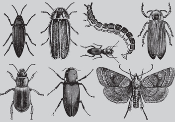 Old Style Drawing Bugs - Free vector #342627