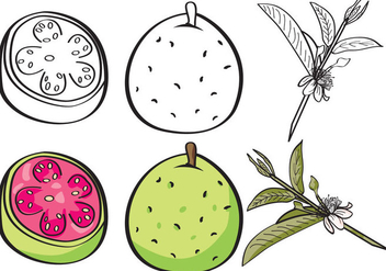 Guava Set - Free vector #343667