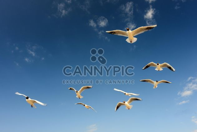 Sea gulls flying in the blue sunny sky over the coast of Baltic Sea - Free image #344007