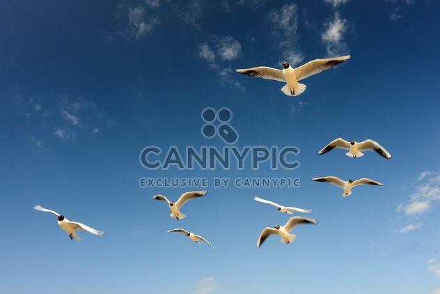 Mouettes volent dans le ciel bleu ensoleillé sur la côte de la mer Baltique - image gratuit #344007