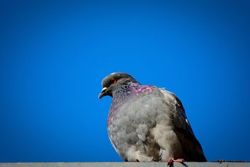 The dove against the perfect blue sky - image gratuit #344227