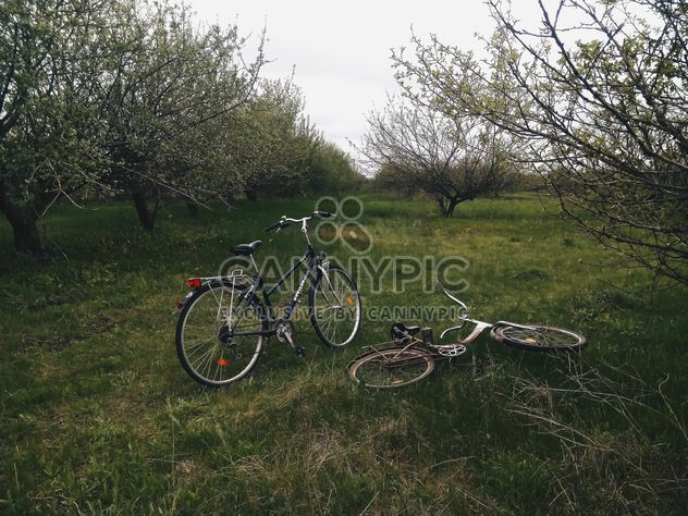 Two bikes on green grass in park - Free image #344617