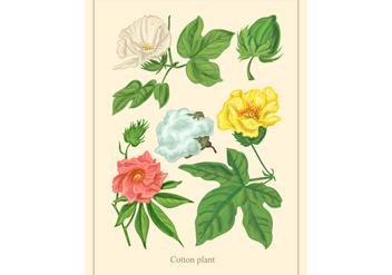 Vintage Cotton Plant Vector - Free vector #345637