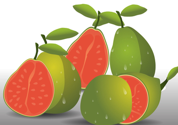 Guava fresh fruit - vector gratuit #346067