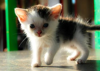 Cute little kitten on floor - бесплатный image #346597