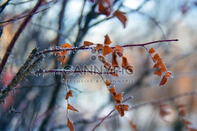 Closeup of dry leaves on tree branch in winter - Free image #346947