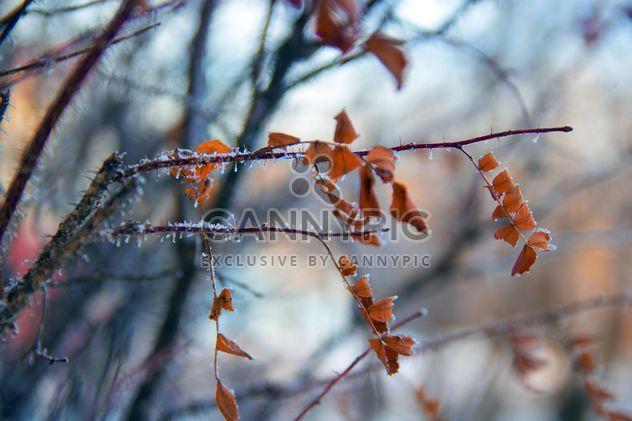 Крупным планом сухих листьев на ветви дерева в зимний период - Free image #346947