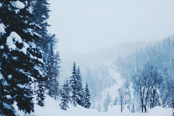 Winter landscape with trees in snow, Taiga - бесплатный image #347007