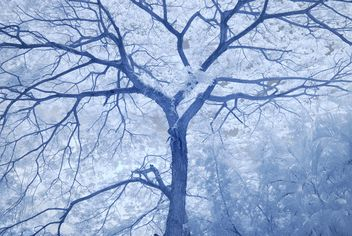 Big tree in winter forest - Free image #347277