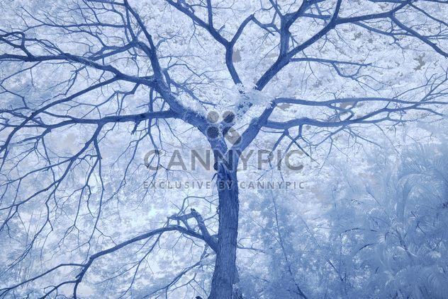 Grand arbre dans la forêt d'hiver - image gratuit(e) #347277