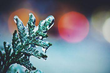 Frozen green twig closeup - Free image #347707