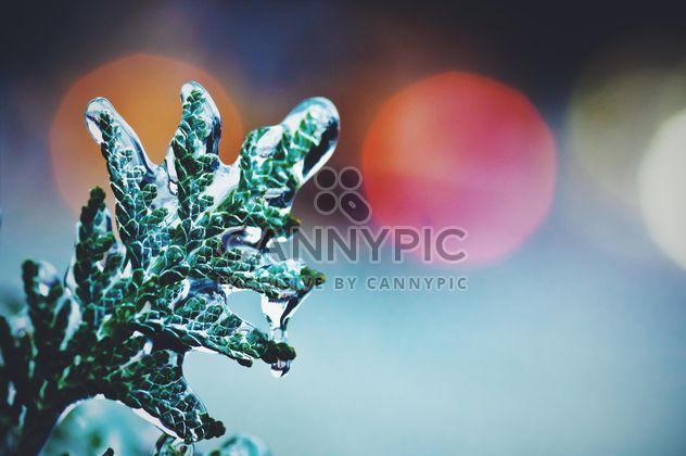 Замороженная зеленая веточка крупным планом - бесплатный image #347707
