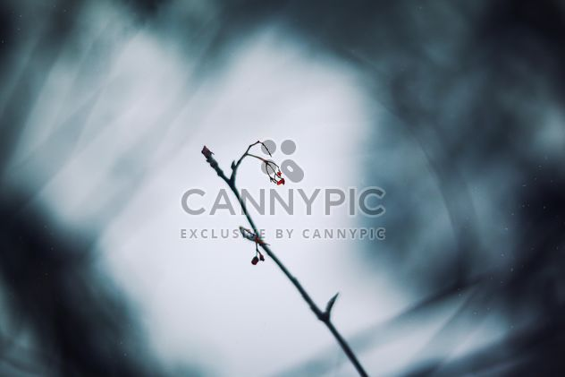 Closeup of tree branch in winter forest - Free image #347737