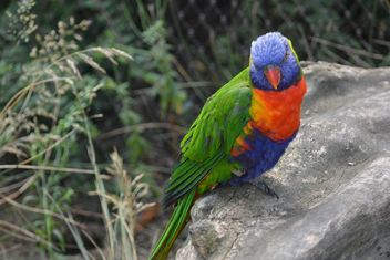 Tropical rainbow lorikeet parrot - Kostenloses image #348467