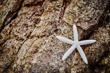Closeup of white starfish on rock - image gratuit #348667
