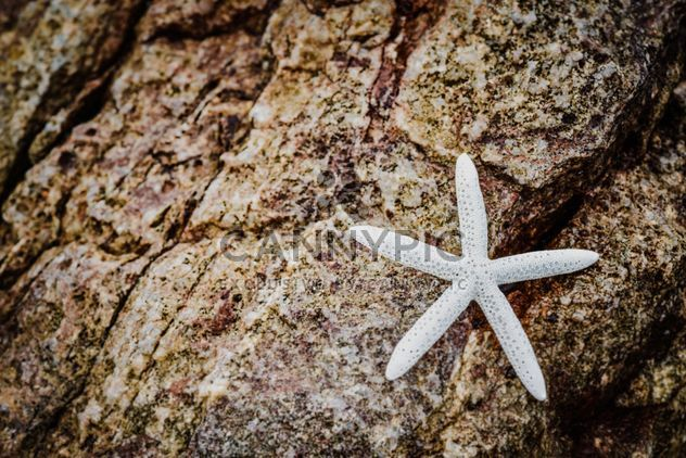Closeup of white starfish on rock - Free image #348667
