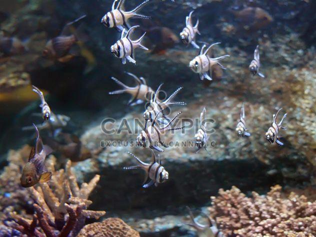 Aquarium marine - Free image #350217