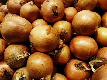 Onions - Kostenloses image #350597