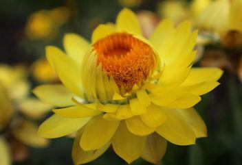 Full Blossom - Free image #361497