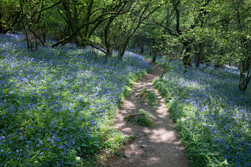 A path through The Bluebell Woods - image #362027 gratis
