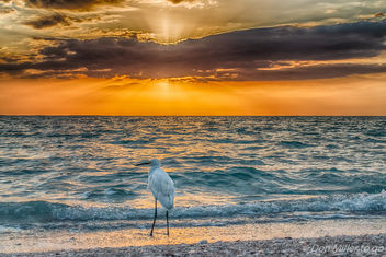Bird by the Bay - image #362837 gratis