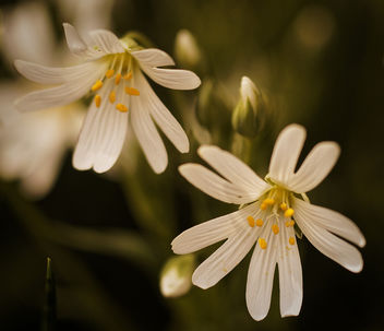 flower art - Free image #363537