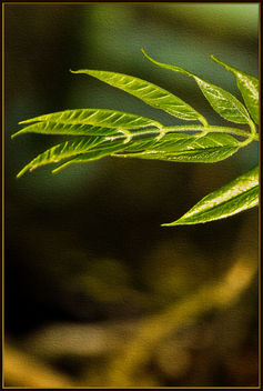 New leaves - image gratuit #364507