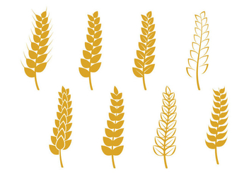 Wheat Stalk Icon - vector #364927 gratis