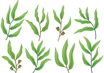 Free Eucalyptus Icons Vector - Free vector #369797