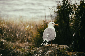 Jerry The Seagull - image #373087 gratis