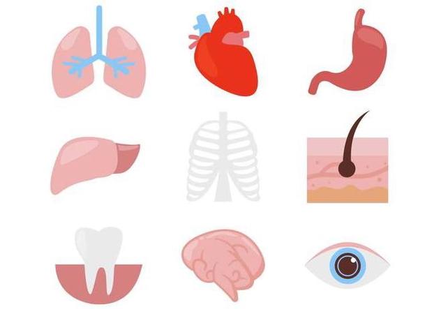 Free Human Organ Body Parts Icons Vector - Free vector #380317
