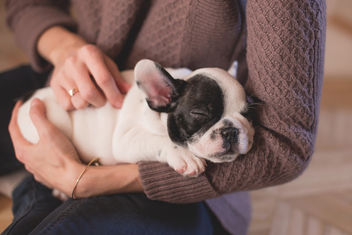 Woman with a puppy - image #381347 gratis