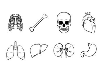 Free Human Internal Organs Vector - Free vector #381607