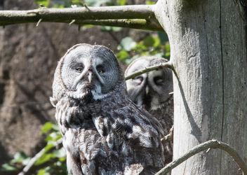 owl - image gratuit #381967