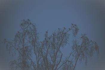 Birds! - image gratuit #382247