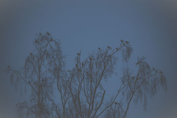 Birds! - Free image #382247