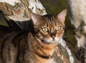 cat - image #382477 gratis