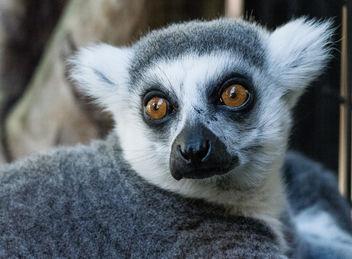 monkey - image gratuit #385867
